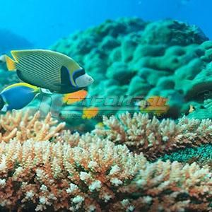 Панель декоративная АВС Пластик Кораллы 2400х600х1,5мм