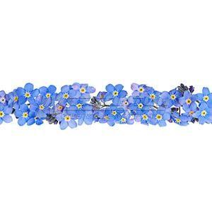 Панель декоративная АВС Пластик Незабудки 2400х600х1,5мм